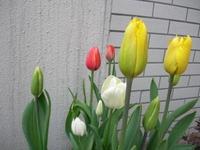 2006_0417_175249aa