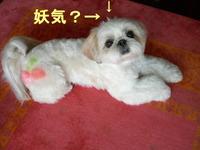 2006_0528_145330aa