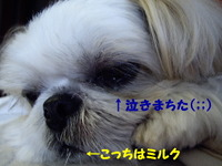 2007_1030_093639